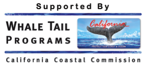 Whale Tail Programs Banner