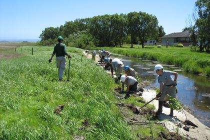 Volunteers plant native saplings along a creek