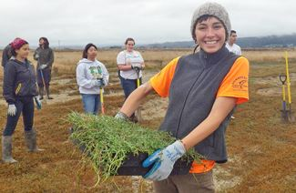 Girl holds a tray of salt marsh grass at a wetland restoration work day