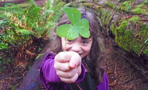 A little girl camper offers a redwood sorrel in the Arcata Community Forest