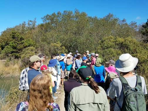 Citizens and City Staff on Trail Walk - Viewing Current & Future SLR Impacts