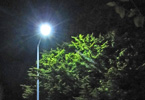 An energy efficient street light shining at night next to a tree