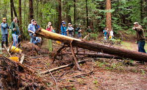 Volunteer group in Arcata Community Forest
